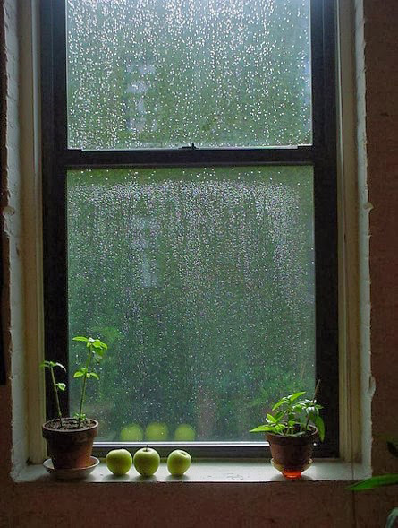 23. rainy window