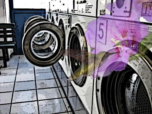 hummingbird:laundromat
