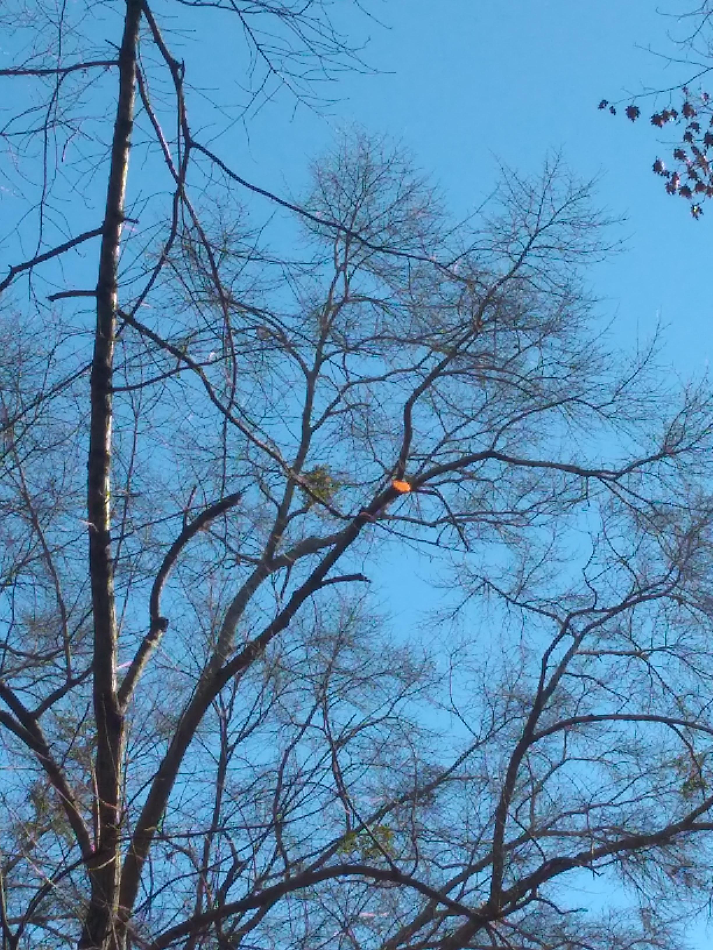 blue sky, gold leaf.jpg